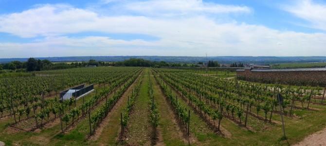 In Vino Veritas- Wissenswertes über den Wein