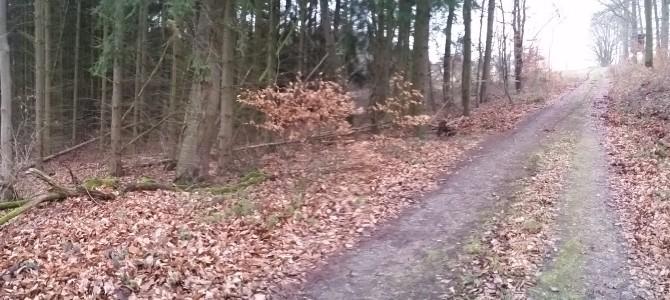Etwas zum Wald