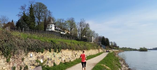 3. Tourenvorschlag: Von Eltville über Walluf nach Schierstein