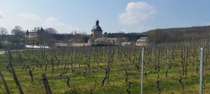 2. Wandertipp : von Hattenheim über Schloss Vollrads  nach Johannisberg