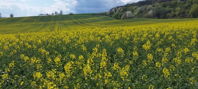 5. Tourenvorschlag: Rundweg von Erbach über Hattenheim nach Erbach