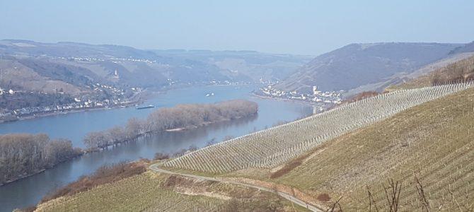 6 Burgen auf (fast) einen Blick – die Wanderung von Assmanshausen nach Lorch